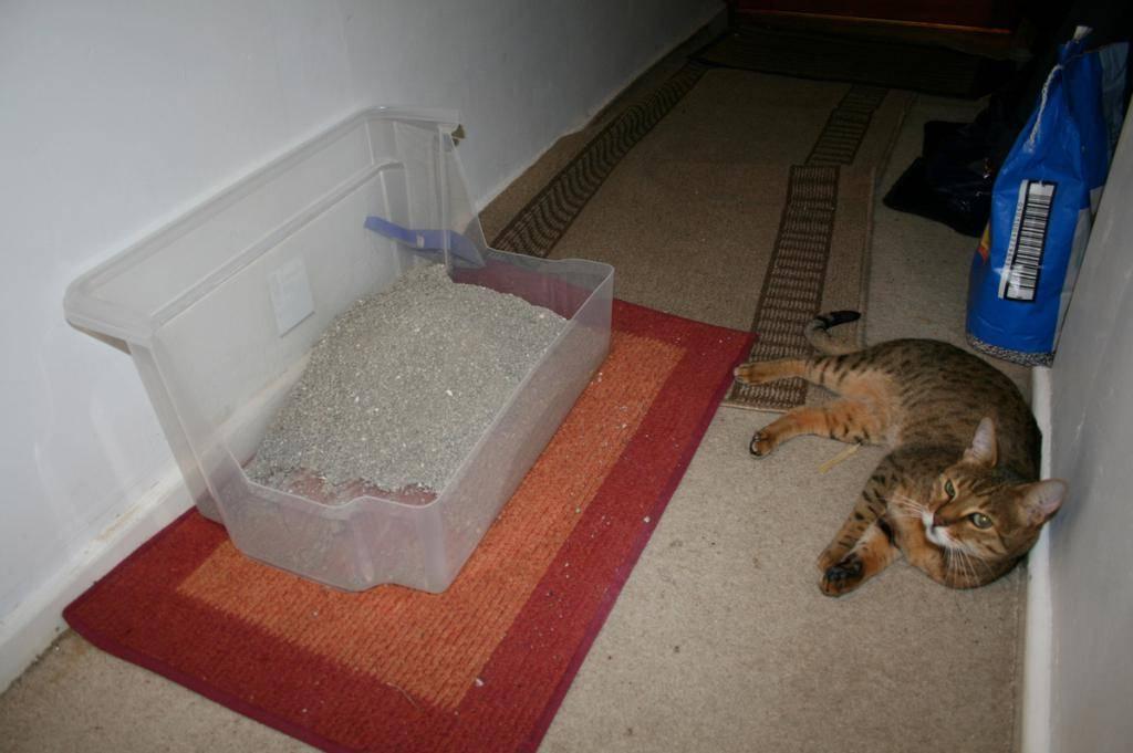 Кошка пытается прятать и переносить котенка: причины почему она это делает