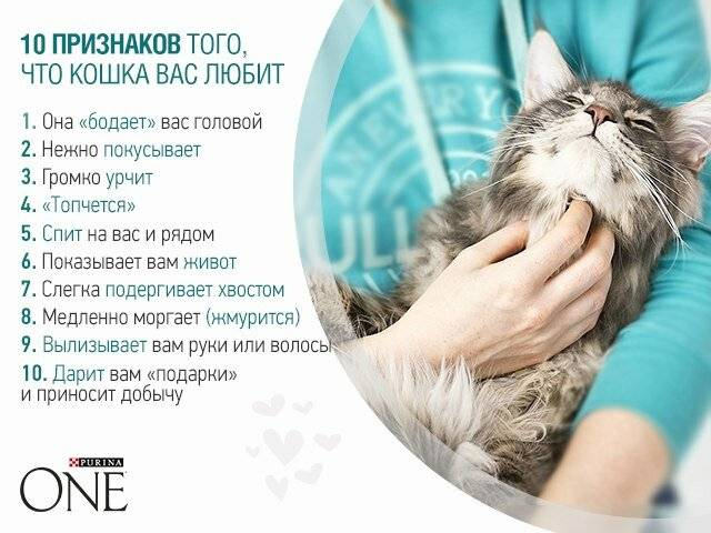 Как кошки манипулируют хозяевами
