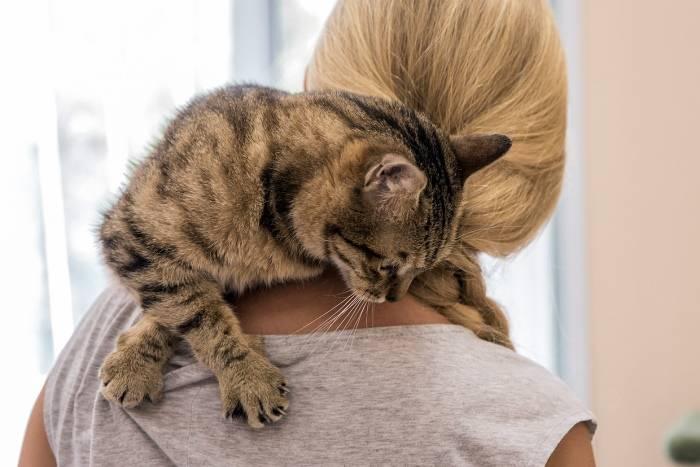 Кому, где и с кем оставить кошку или кота на время отпуска