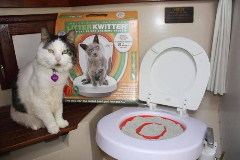 Как приучить кота к унитазу: практические советы