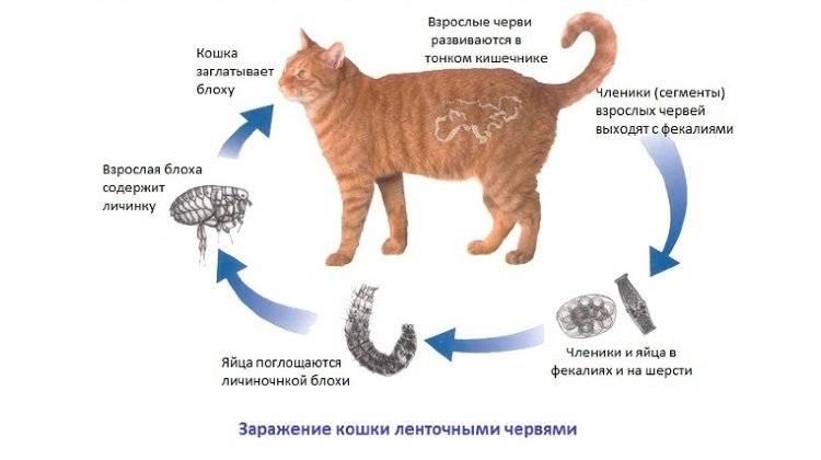Что делать и как оказать первую помощь при поносе у кота