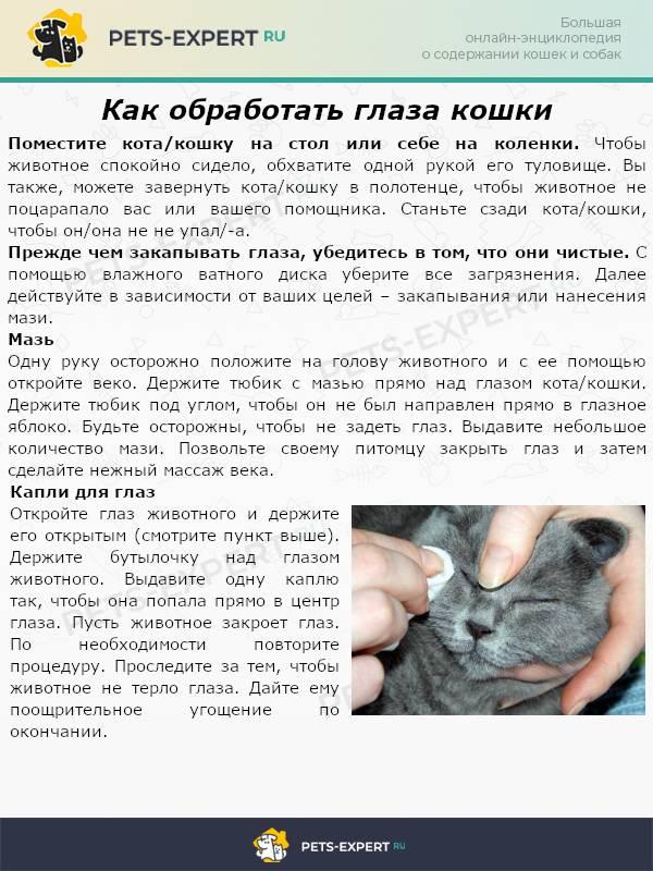 Общие признаки, характерные симптомы конъюнктивита у котят. что делать, если конъюнктивит у котёнка: правила и методы лечения - автор екатерина данилова - журнал женское мнение