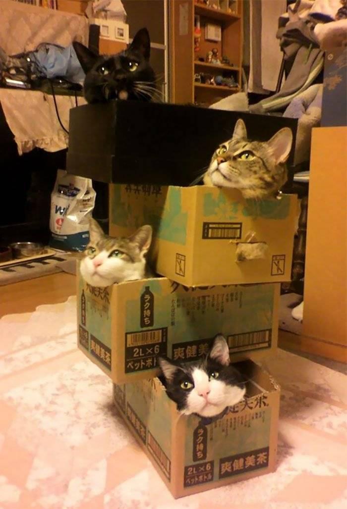 Почему кошки любят коробки и пакеты
