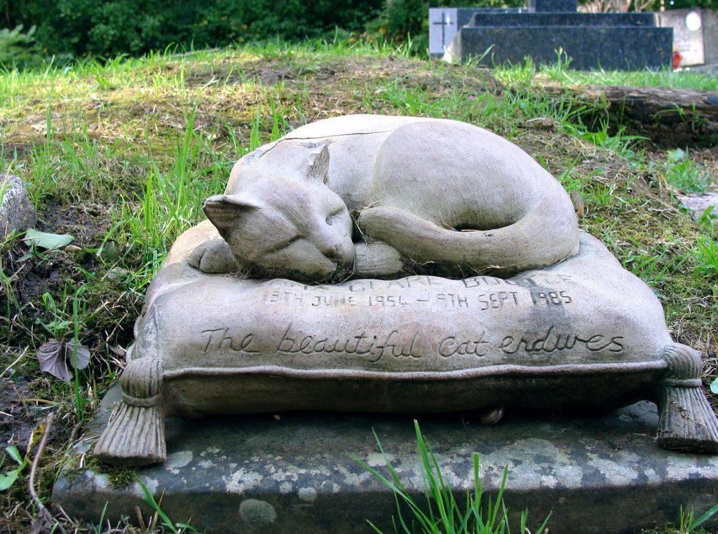 Основные правила, как похоронить кота зимой. где и как правильно похоронить кошку где лучше похоронить кошку