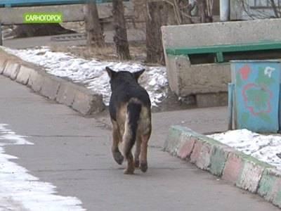 Держись, собака: почему новый закон о бездомных животных станет кошмаром для всех