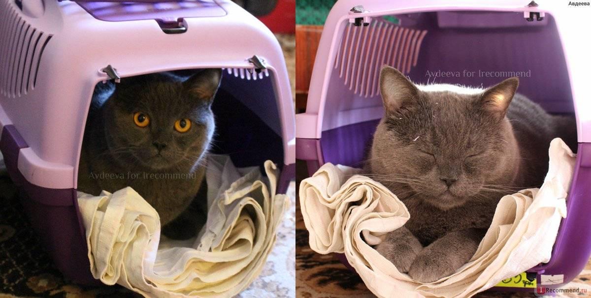 Правила перевозки кошки и транспортировка багажом по россии и за границу