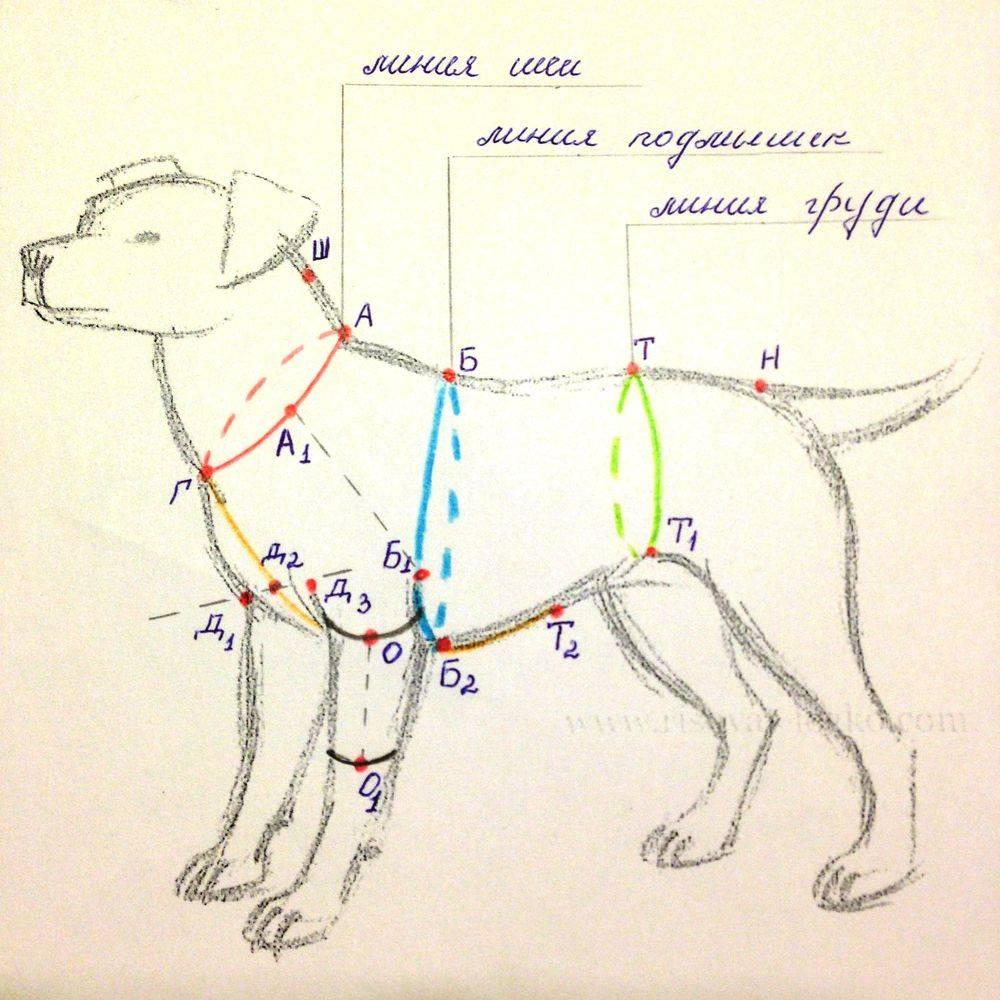 Как понять, где холка у собаки, чтобы сделать инъекцию