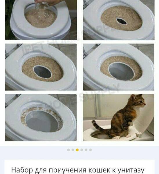 Как часто менять и мыть лоток котенку (кошке)