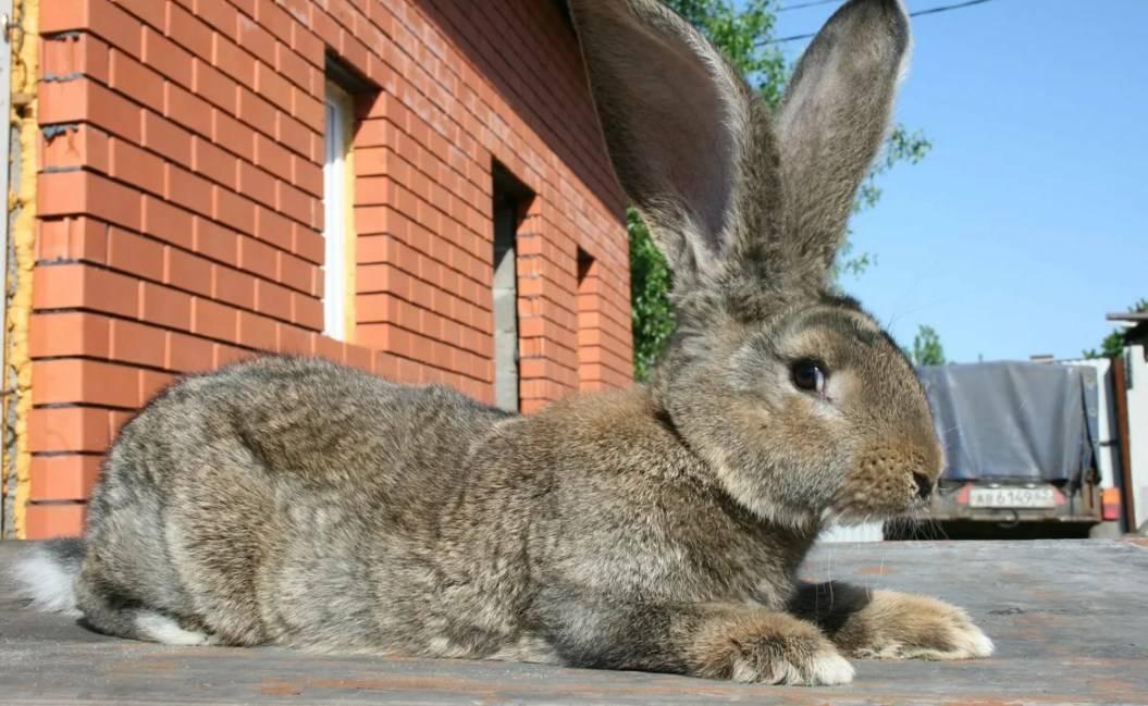 Причины гибели кроликов