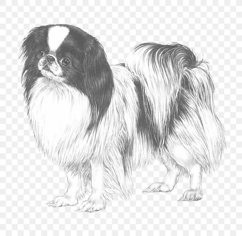 Тибетский спаниель (тобби): необычная декоративная собачка из азии