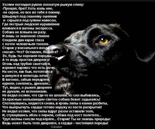 Что делать, если собака проявляет агрессию: советы кинологов по корректировке