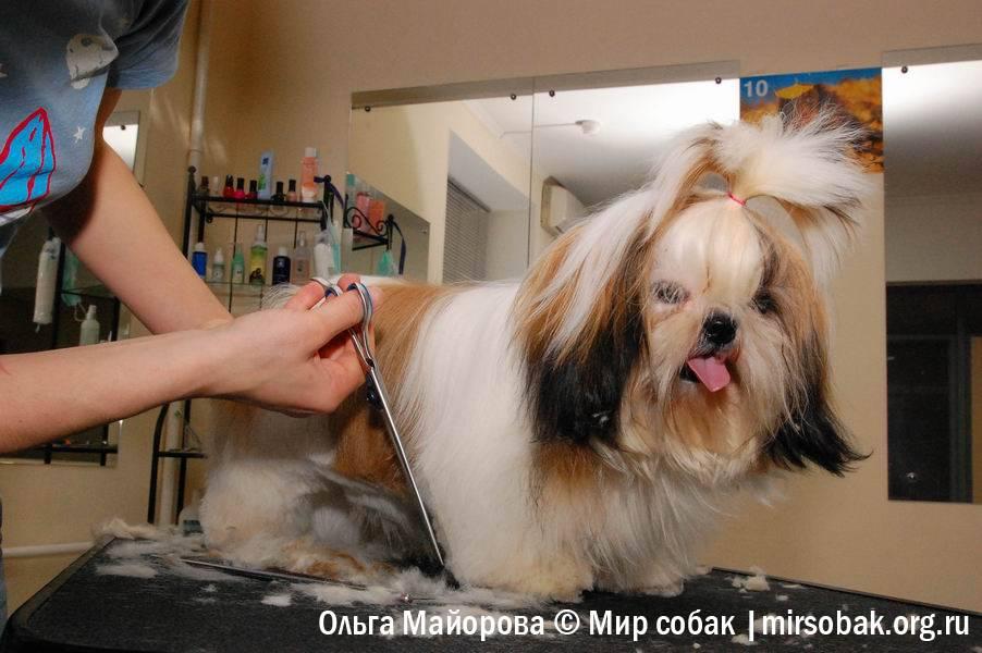 Можно ли собаке стричь и удалять усы.
