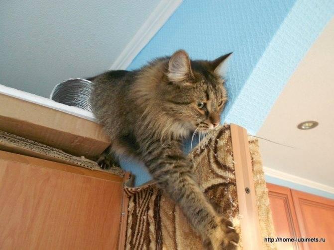 10 странных привычек кошек, для которых нашлось логическое объяснение