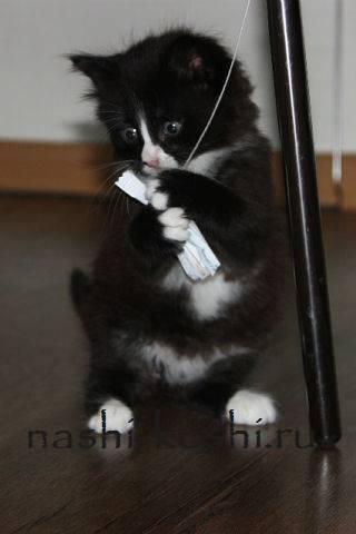 Кот нападает царапается и кусается, что делать?