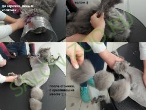 Колтуны у кошек чем лечить