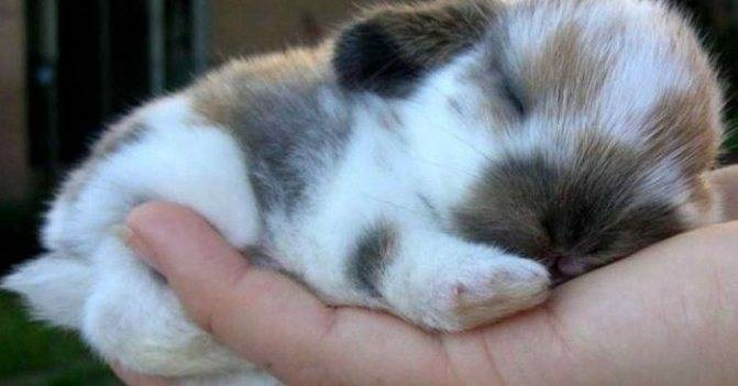 Как и сколько по времени спят кролики в сутки?