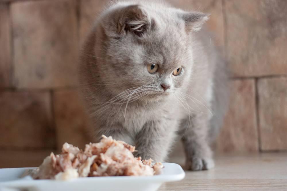 Можно ли кормить кошку сырым мясом и чем опасен продукт
