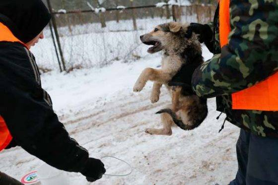 Собачья смерть: несмотря на запрет, бродячих животных продолжают убивать