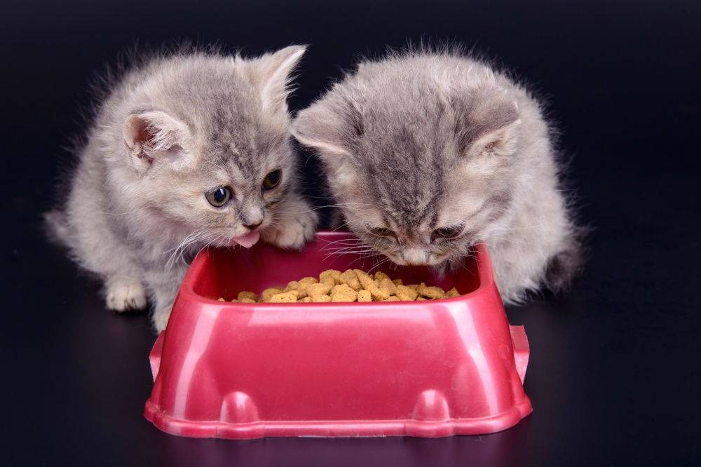Gemon (корм для кошек и котят): описание и состав