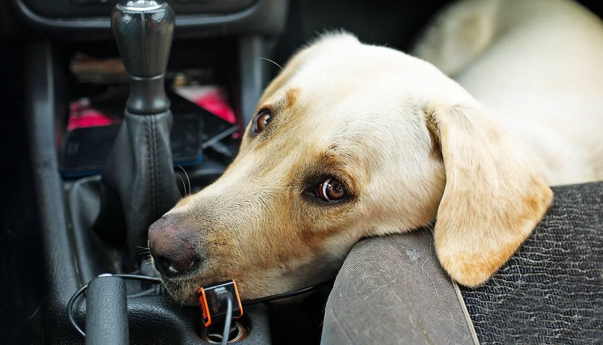 Укачивает в машине, что делать?