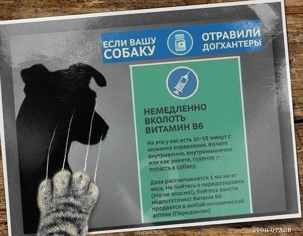 20 вещей, которые могут отравить кошку. чем может отравиться кот или кошка в домашних условиях? - petstime.ru