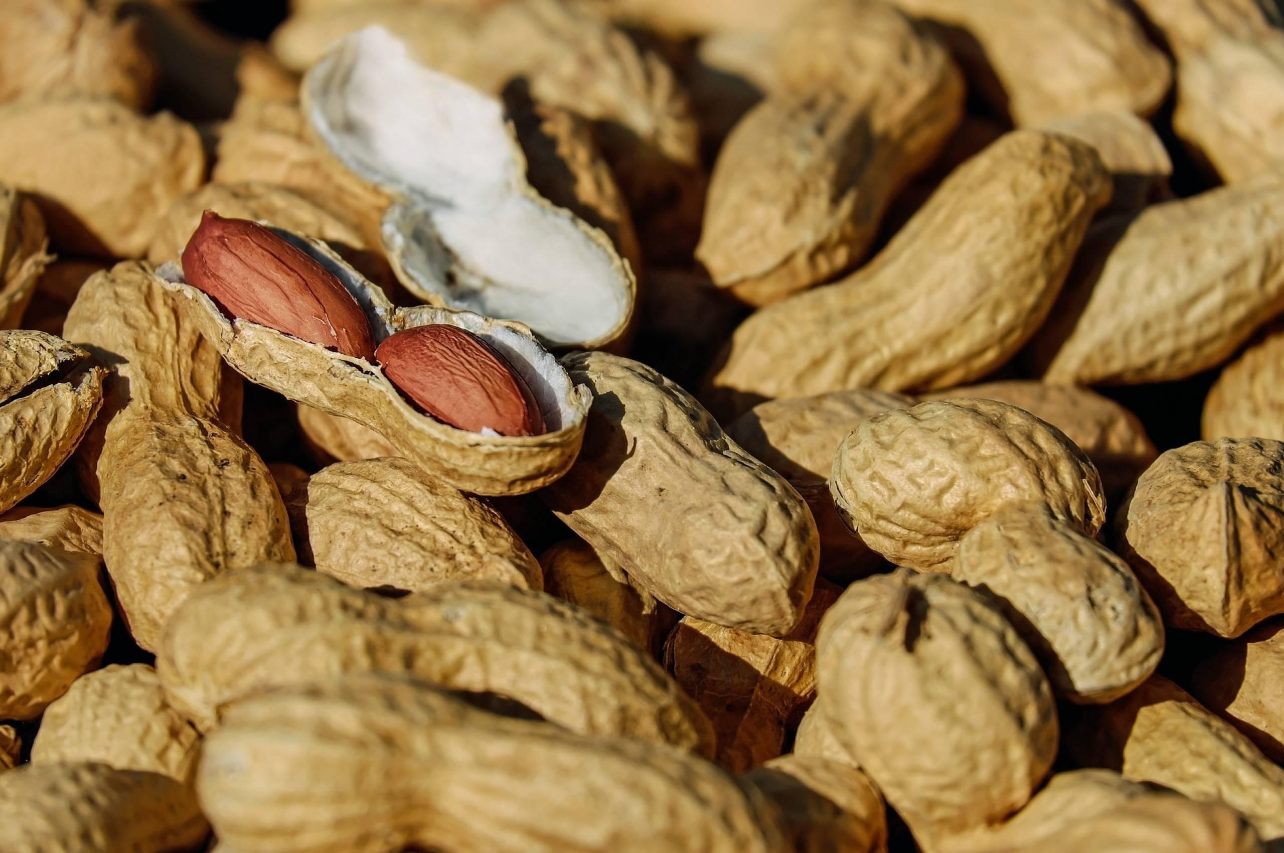 Можно ли хомякам грецкие и кедровые орехи, миндаль, фундук или арахис?