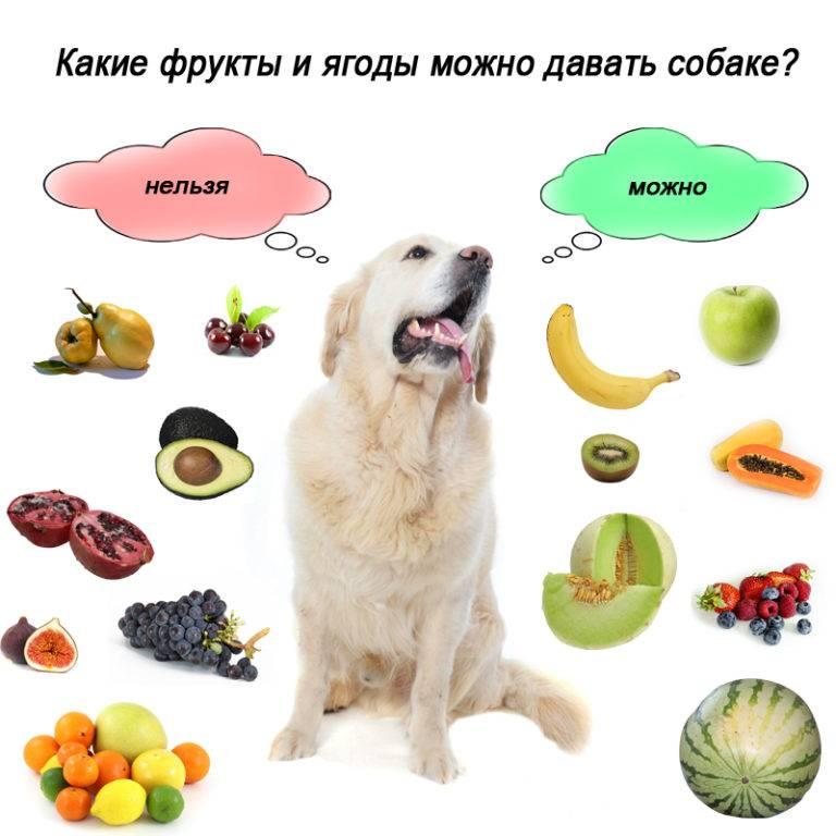 Можно ли давать собаке сладкое