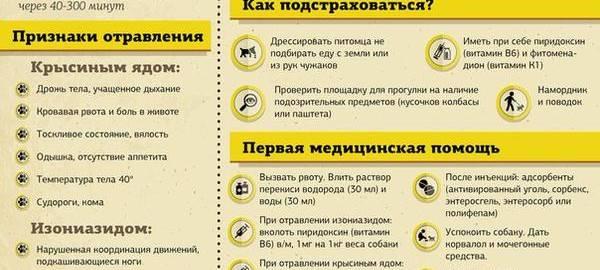 Симптомы и признаки отравления у собак - что делать и что дать собаке при отравлении крысиным ядом, изониазидом - первая помщь и последствия в статье на сайте лапы и хвост