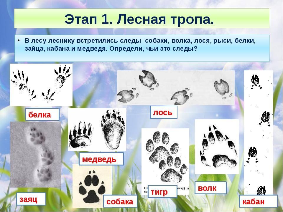 Следы волка: как отличить и что нужно знать - truehunter.ru