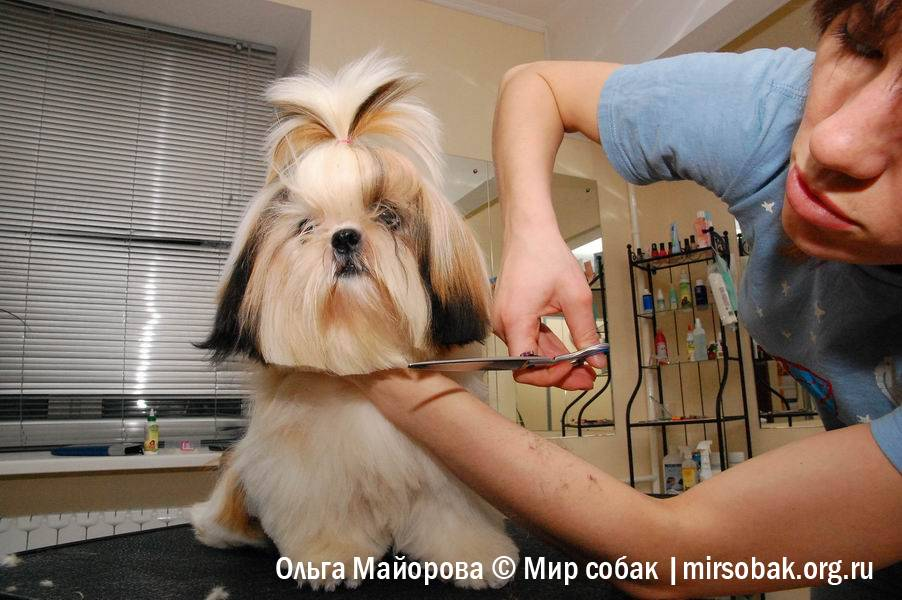 Можно ли собакам стричь когти? как стричь когти собаке?
