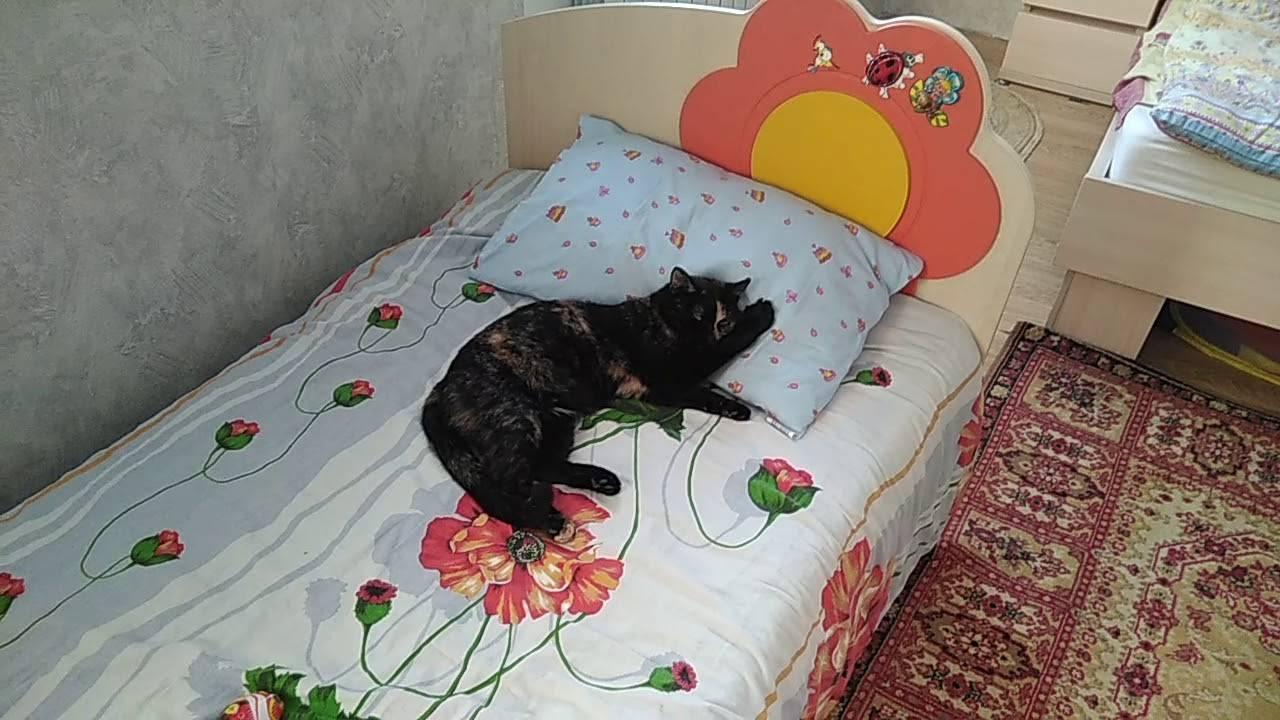 Почему кот спит на голове хозяина