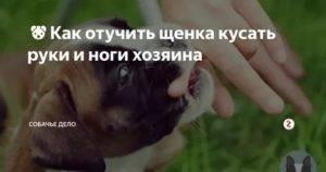 Почему щенок кусает руки. как отучить щенка кусаться? как вести себя хозяину?