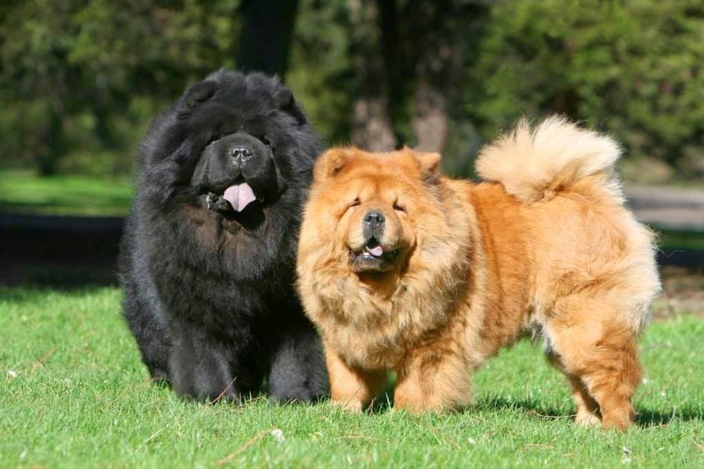 Топ-20 самых умных собак — породы с высоким уровнем интеллекта