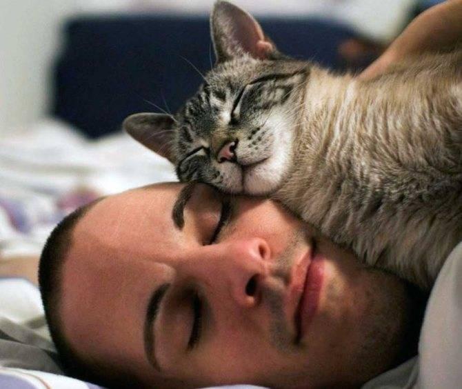 Скучает ли ваша кошка, когда вас нет дома: исследования — 4 лапки