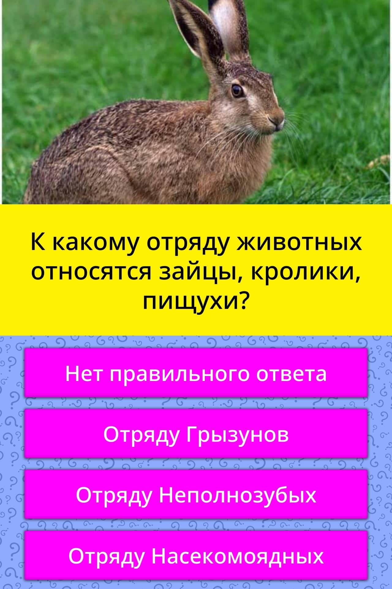 Полный список и описание самых маленьких пород декоративных кроликов
