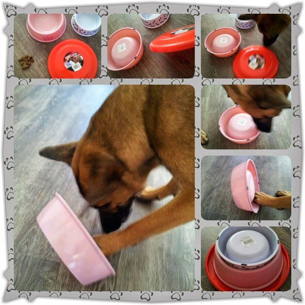 Делаем игрушки для собаки своими руками