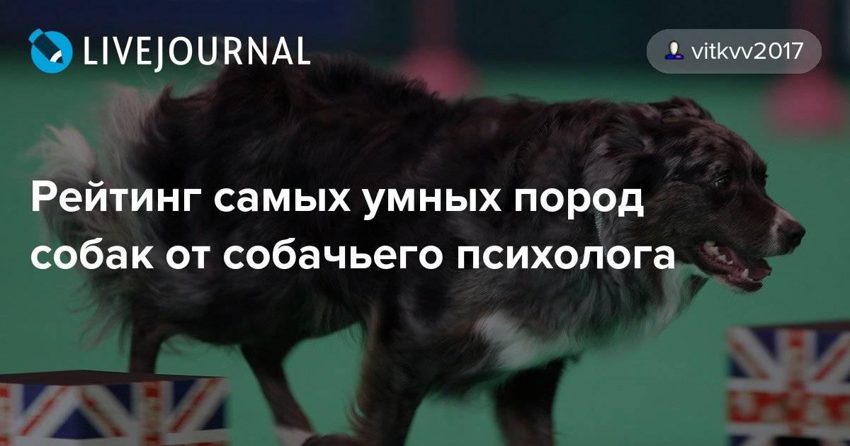 Топ-10 – самые добрые породы собак в мире