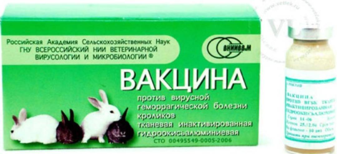 Что нового в лечении миксоматоза у кроликов.