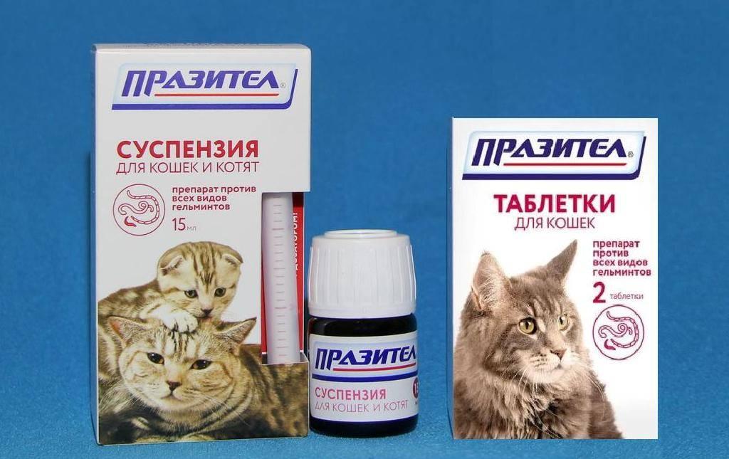 ᐉ обезболивающие уколы для кошек в домашних условиях — кеторол коту дозировка - zoo-mamontenok.ru