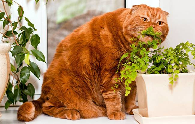 Почему кошки едят траву? - причины - домашние животные