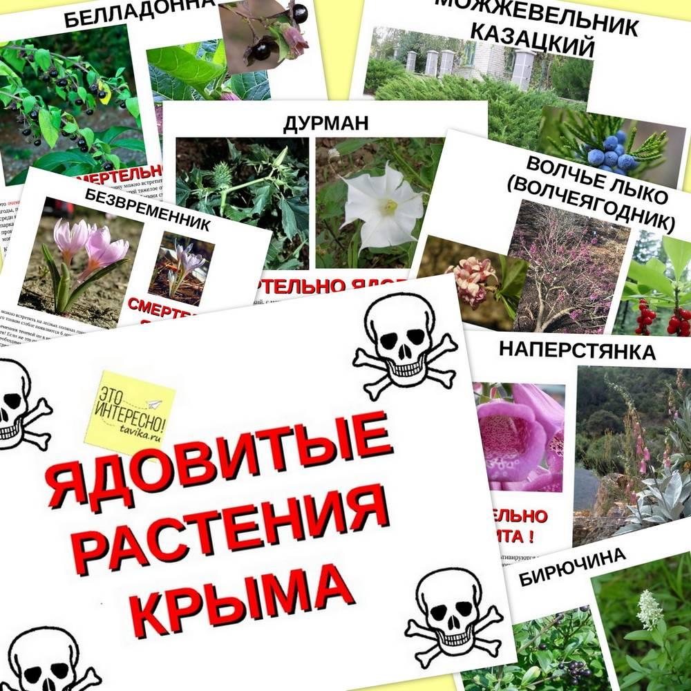 Растения опасные для домашних животных