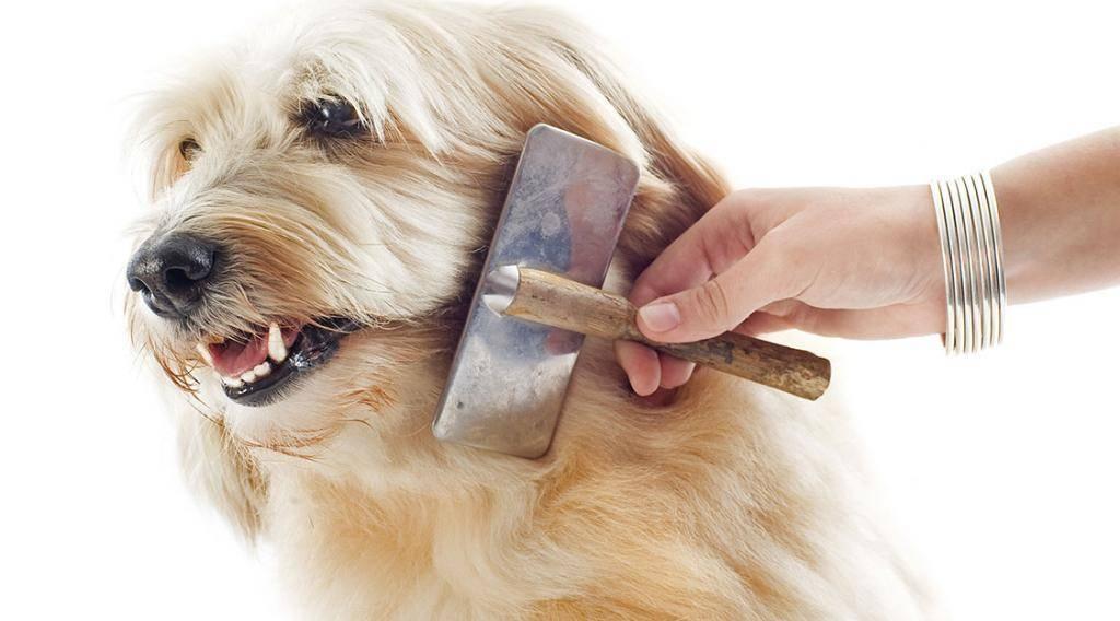 Плохая шерсть у собаки – как улучшить состояние шерсти? | royal groom