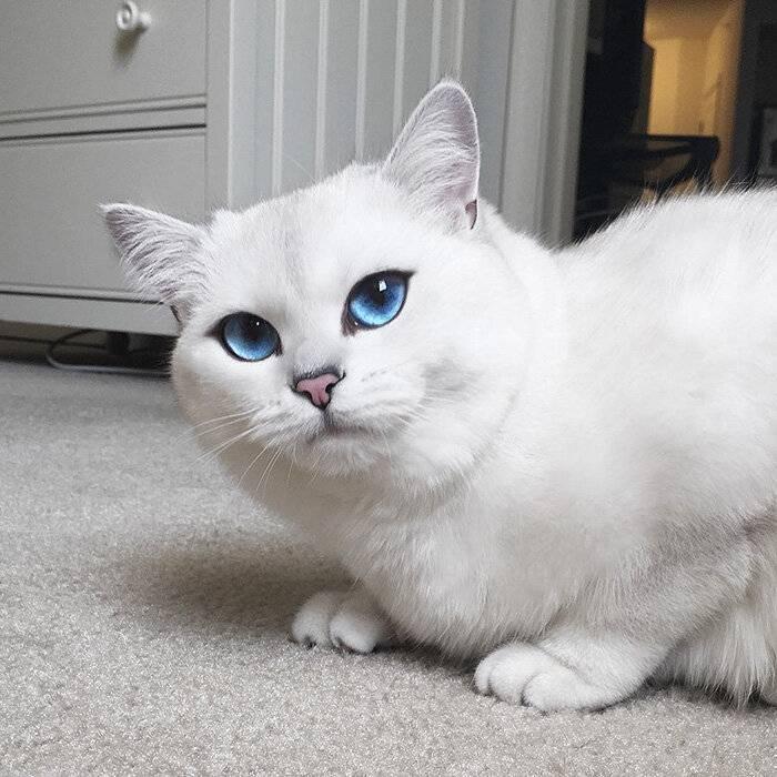 Глухота у белых кошек | кошки вики | fandom