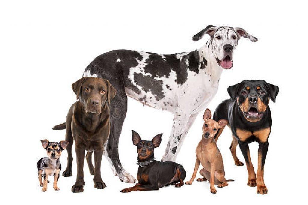 Лучшие собаки для содержания в квартире: как выбрать питомца
