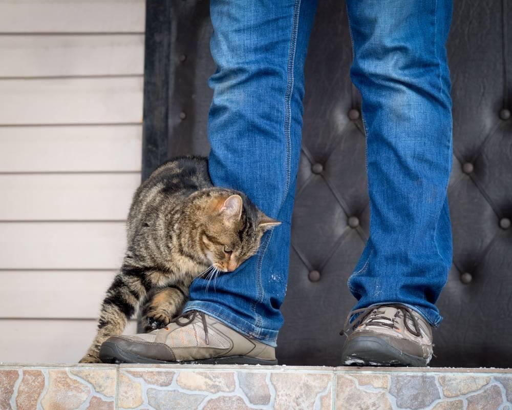 5 признаков того, что кошке не нравится гость квартиры - gafki.ru