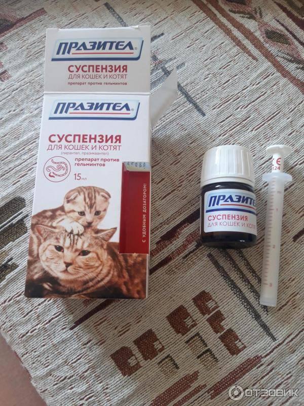 «празител» суспензия для кошек и котят инструкция по применению: форма выпуска, как давать, дозировка, аналоги