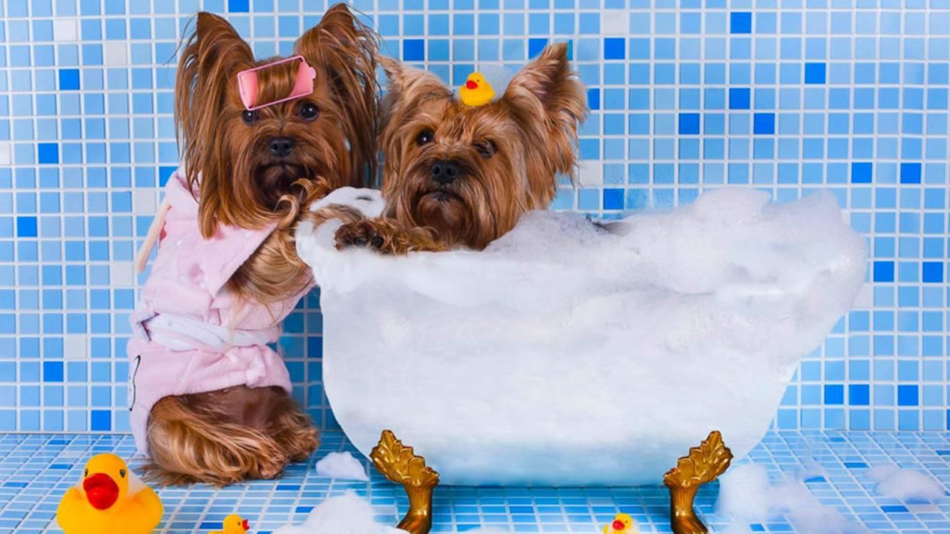 Что будет если помыть собаку человеческими шампунями: разрешается ли это