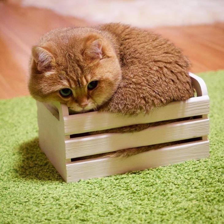 Почему кошкам нравятся коробки