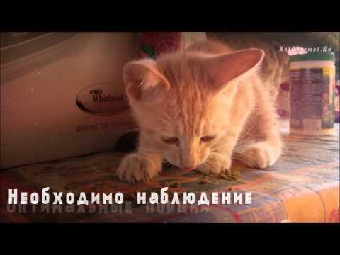 Когда можно начинать учить котёнка есть самостоятельно и как это сделать