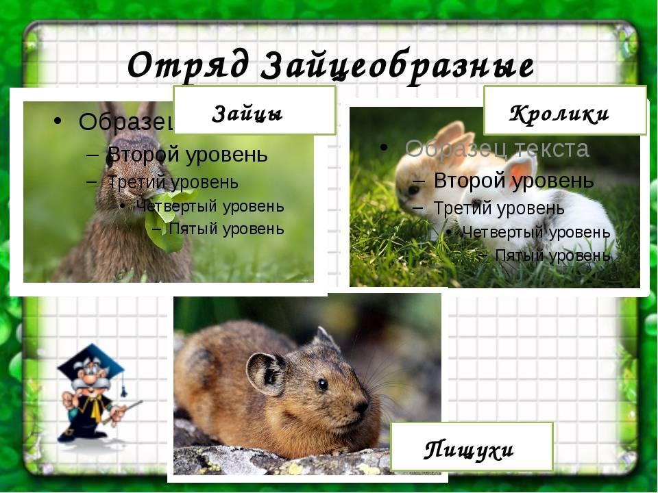 Детёныши животных и их названия | как называются самки и самцы?